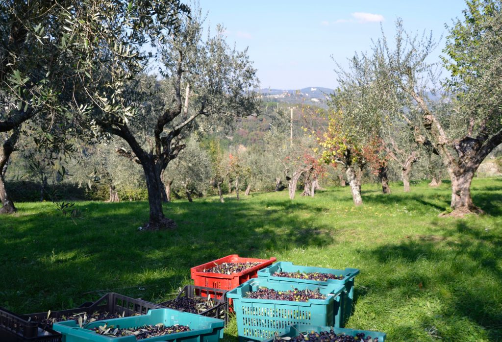 Olive trees and boxes