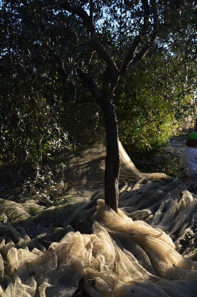 Nets under trees